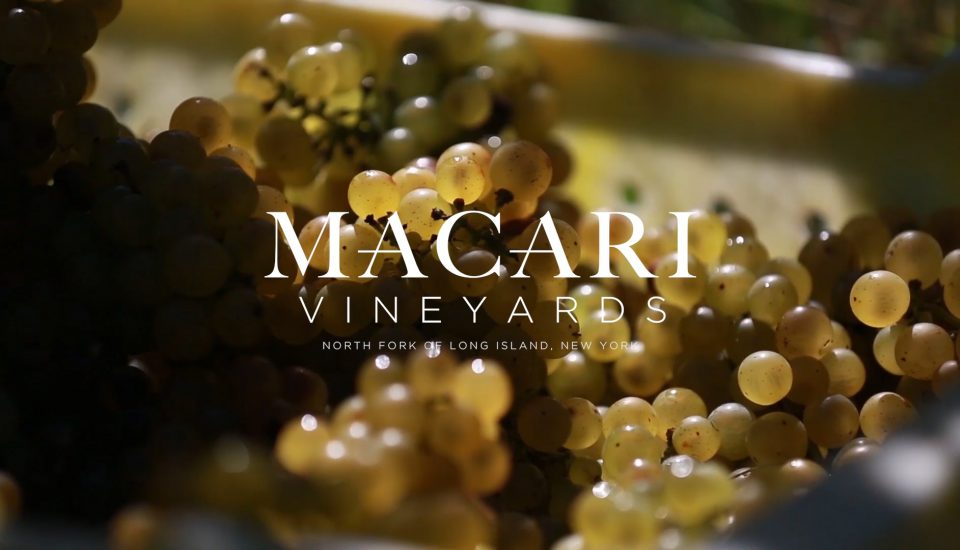 Visual Natives - Macari Vineyards